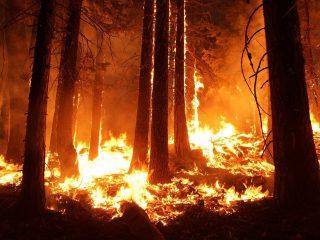 Scott Morrison Australië bosbrandenScott Morrison Australië bosbranden